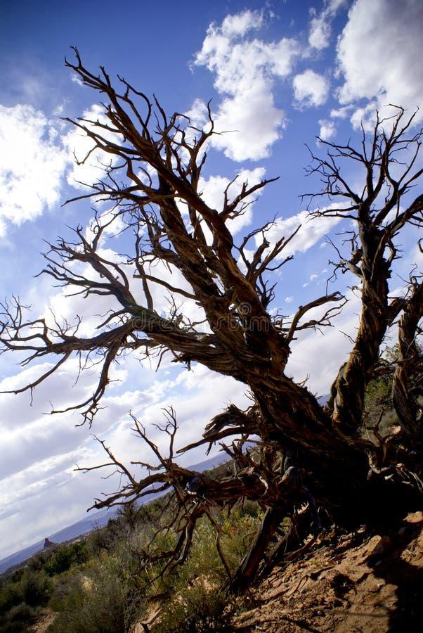 结构树在默阿布,犹他 免版税库存图片
