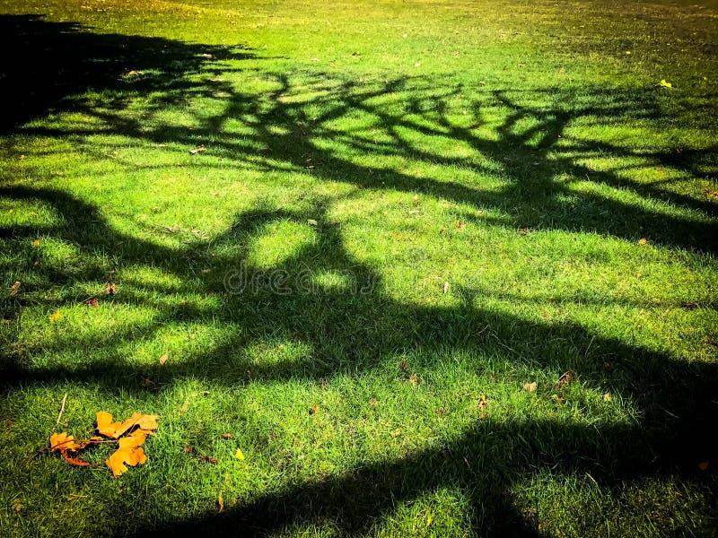 结构树影子 免版税图库摄影