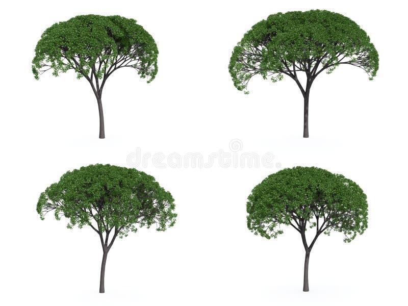 结构树杨柳 皇族释放例证