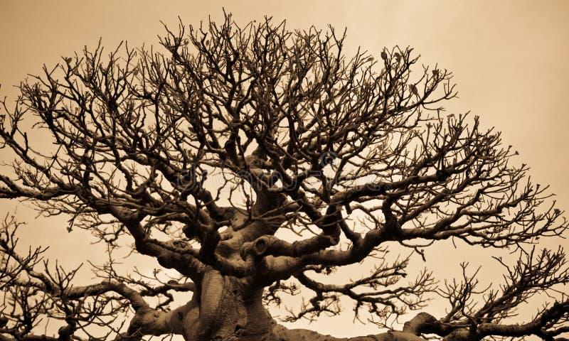结构树模式 库存照片