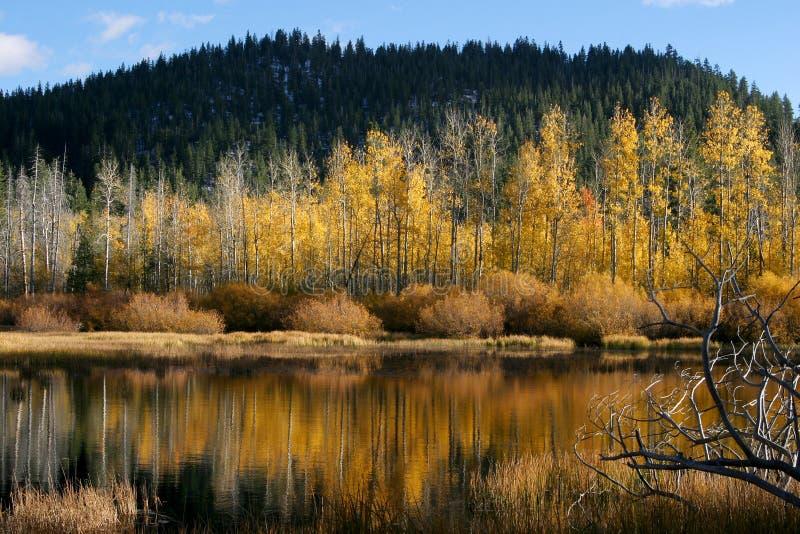 结构树浇灌黄色 免版税库存图片