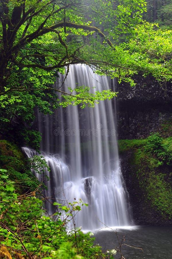 结构树瀑布 库存照片