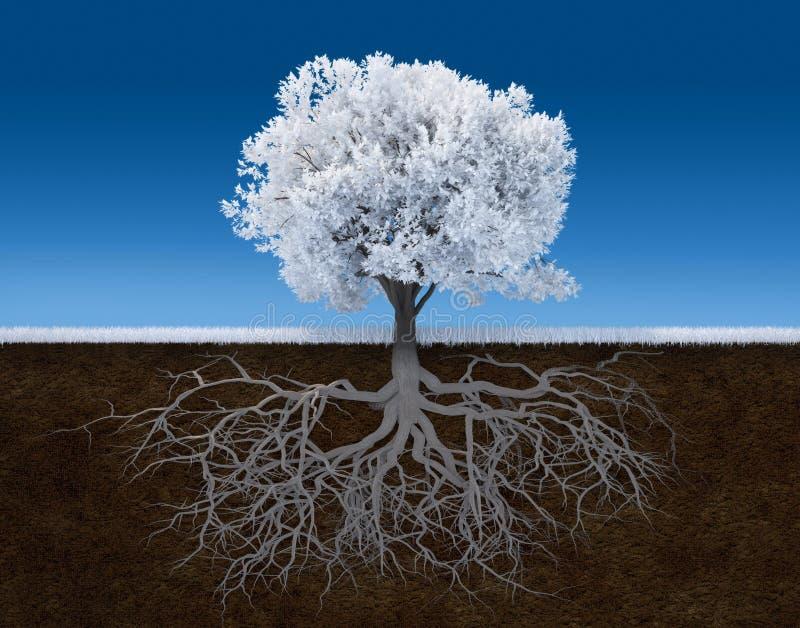 结构树白色 皇族释放例证