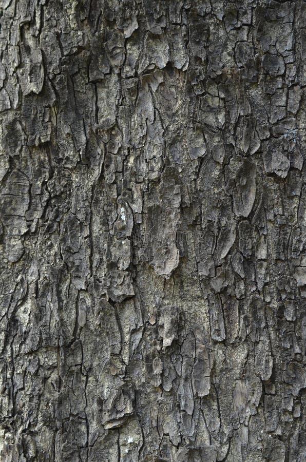 结构树的吠声 一个美好的背景 墙纸 库存照片