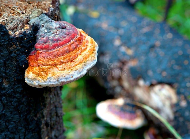 结构树真菌 免版税库存照片
