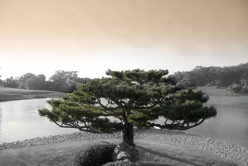 结构树禅宗 免版税库存照片
