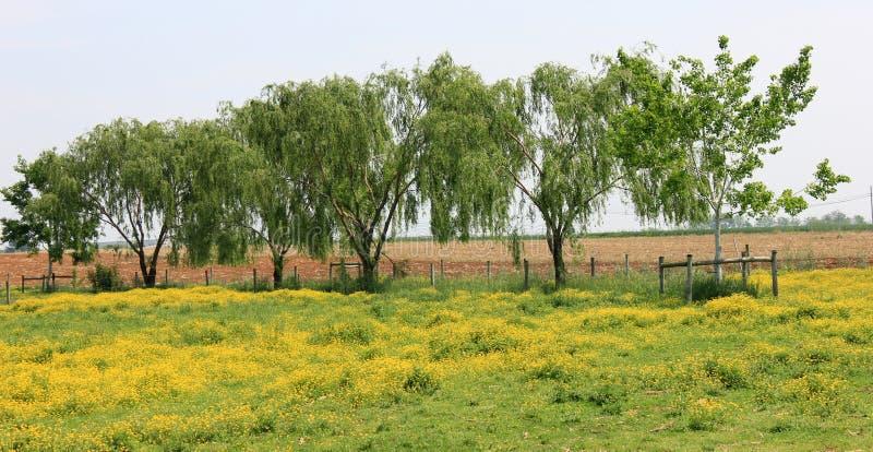 结构树线路在毛茛域的 图库摄影