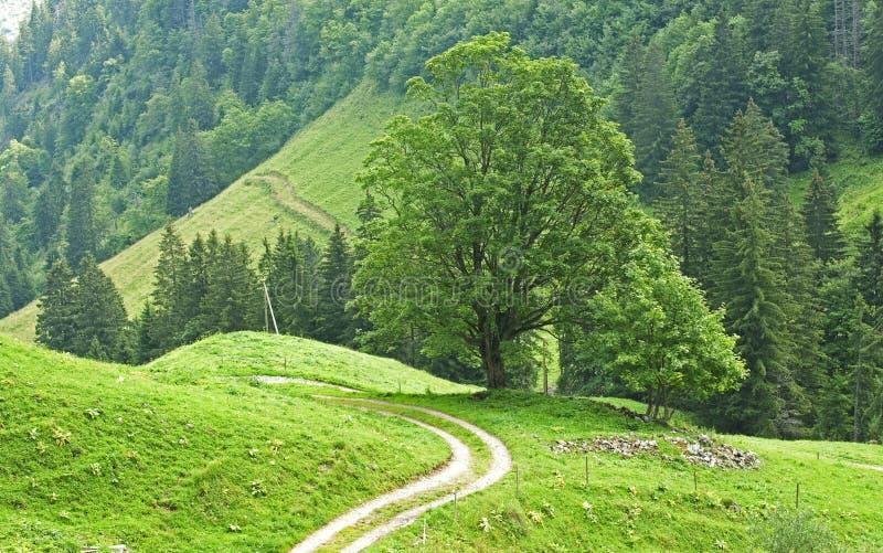 Download 结构树 库存图片. 图片 包括有 木料, 横向, 草原, 尖酸, 住宅, 本质, 问题的, 地产, 叶子 - 15695157