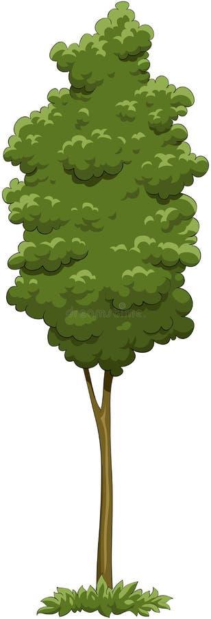 结构树 向量例证