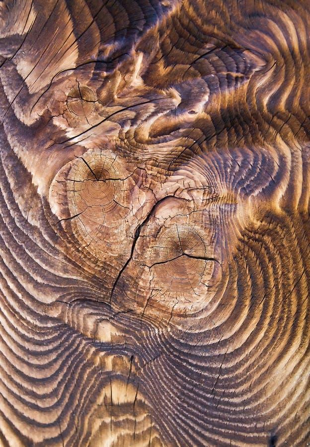 结构涂焦油木 库存图片