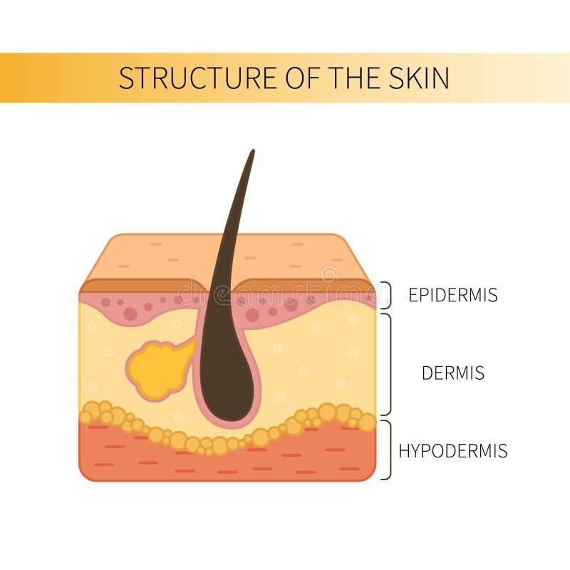 结构oof皮肤 库存例证