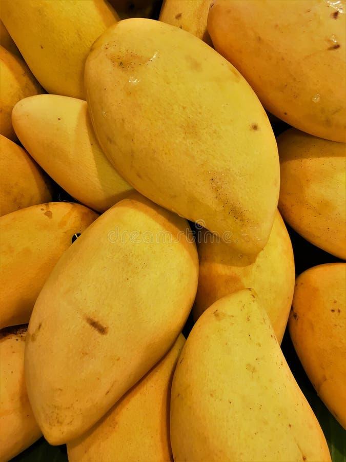 结果实成熟的芒果 结果实成熟的芒果 免版税库存照片