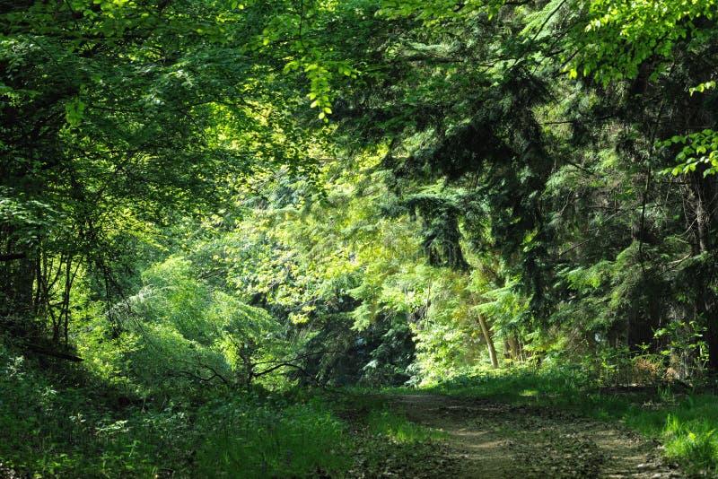 结算跟踪木头的被阐明的导致 免版税库存照片