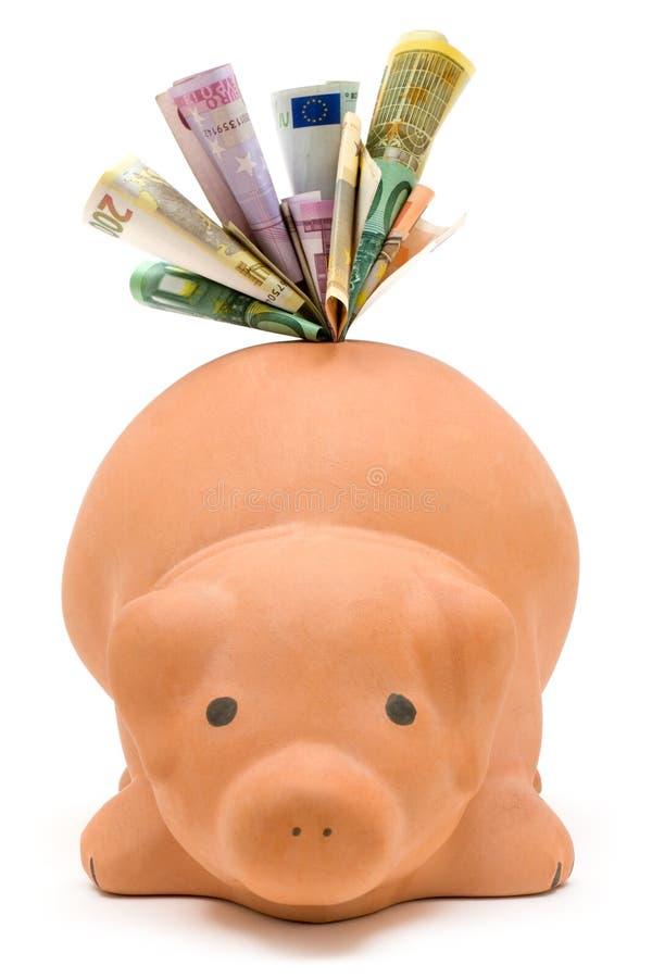 结转猪 免版税库存图片