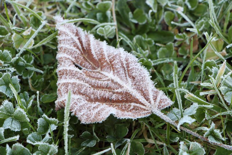结霜的叶子在庭院里 免版税库存照片