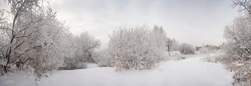 结霜的横向雪结构树 免版税库存图片