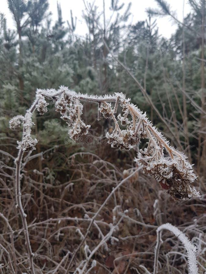 结霜的自然在秋天 免版税库存图片