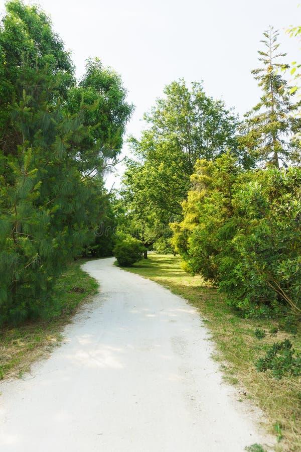 绕走的足迹在有具球果和落叶树的一个公园 免版税库存图片