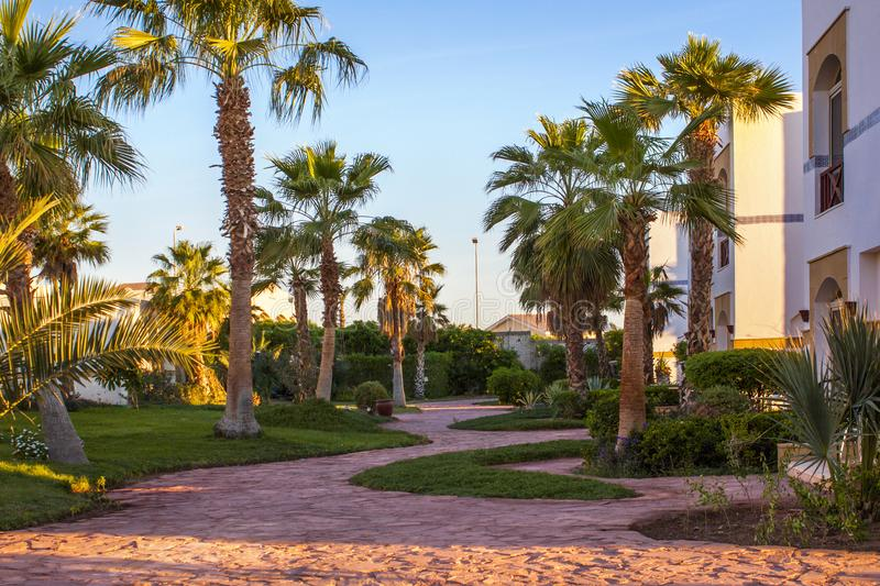 绕道路在庭院里,在高棕榈和绿色草坪之间,一个温暖的夏天晚上 库存图片