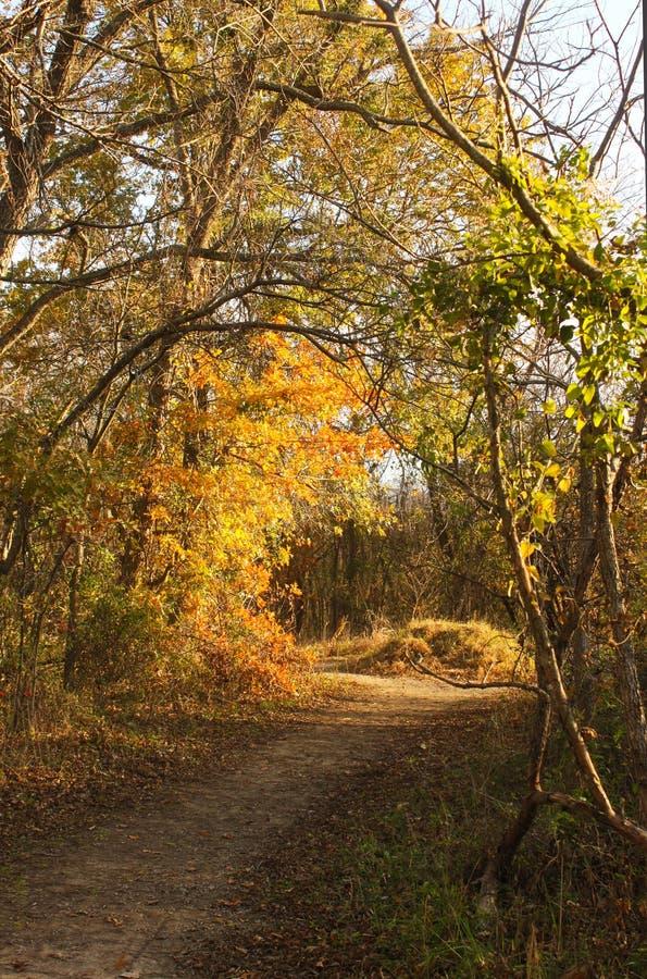绕道路穿过晚秋天森林在与走路通过叶子的阴影和太阳的金黄小时 免版税图库摄影
