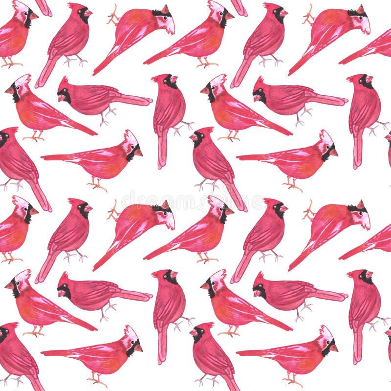 绘背景的北主要或Cardinalis cardinalis鸟无缝的水彩鸟 库存例证