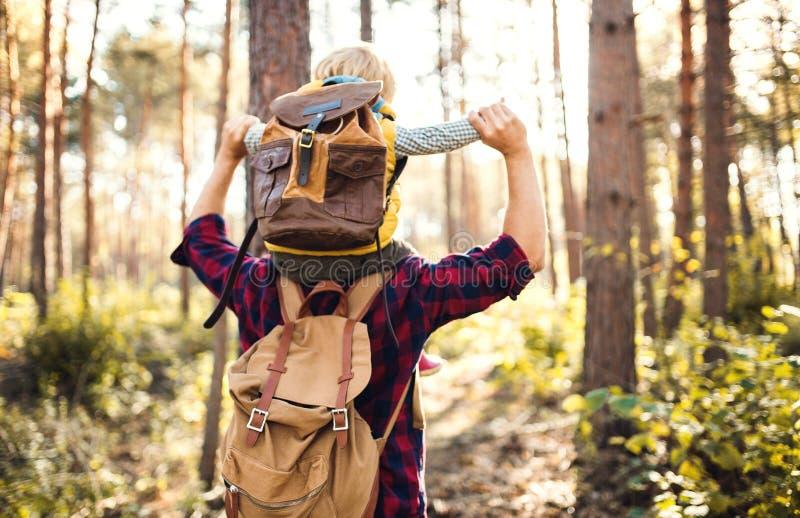 给小孩儿子肩扛乘驾的一个成熟父亲在秋天森林里 图库摄影