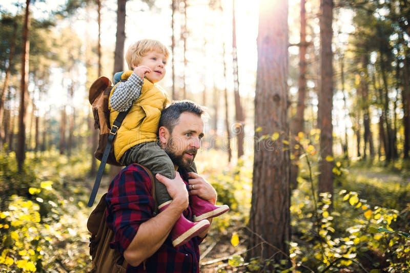 给小孩儿子肩扛乘驾的一个成熟父亲在秋天森林里 库存图片