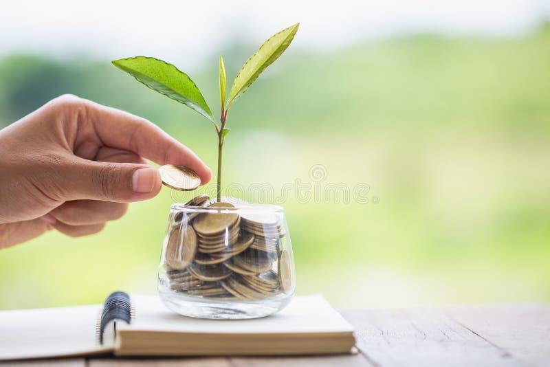 给硬币的手生长从堆的树硬币 生长在储款的植物铸造金钱 生长在金钱硬币的绿色树, 图库摄影