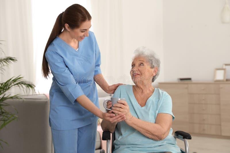 给茶的护士轮椅的妇女户内 免版税库存图片