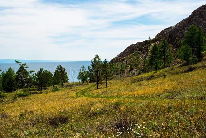 绞的土路通过与松树和山的绿色领域 免版税库存图片