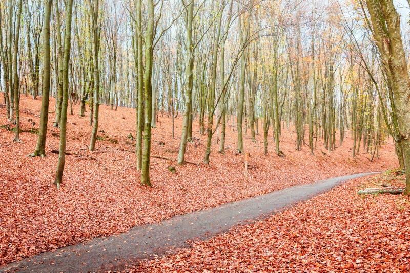 绞的自行车道路穿过美丽的秋天col的荷兰森林 免版税库存图片