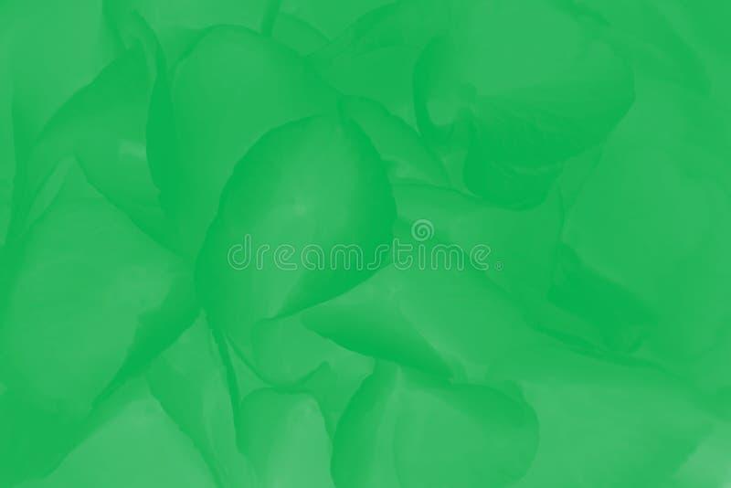 绣球或蜂花图案的绿色抽象背景 库存图片