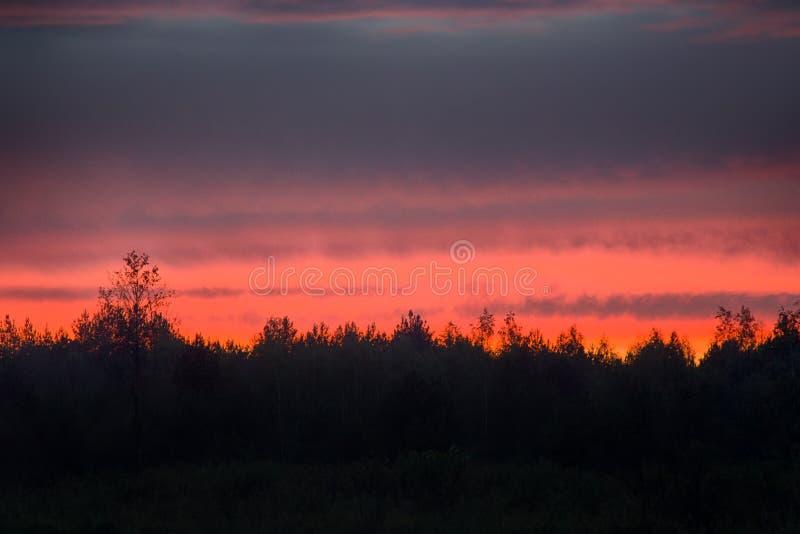 绯红色日落和树接合的边缘  库存照片
