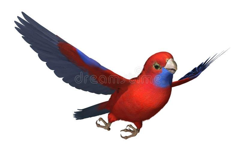 绯红色飞行鹦鹉rosella 库存例证