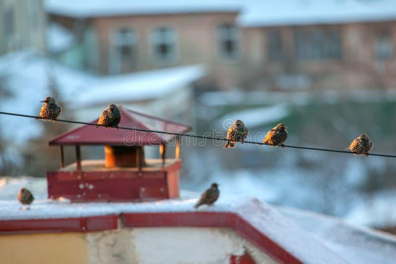 绳子上的鸟 免版税库存照片