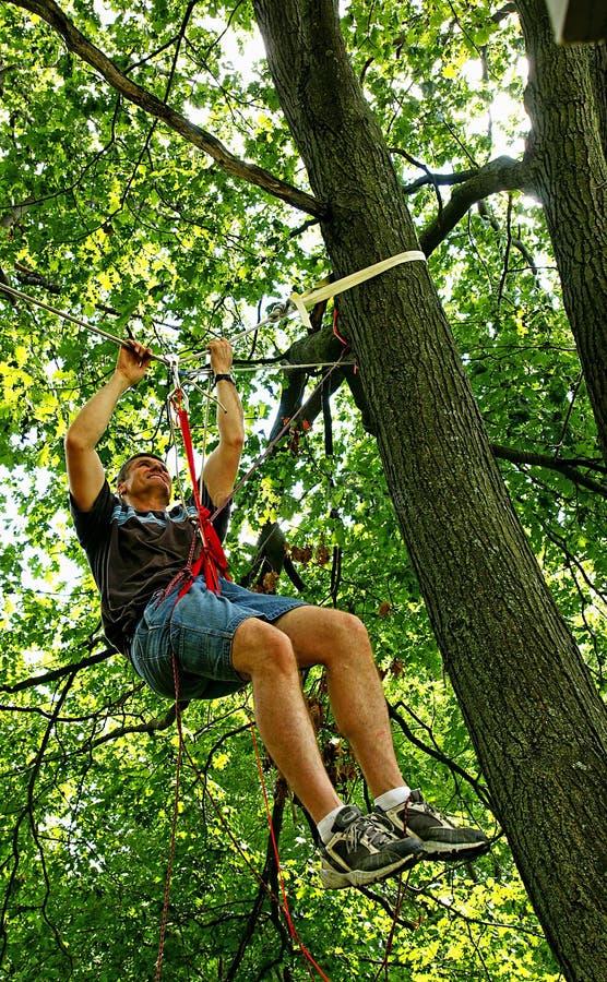 绳索暂停了结构树 图库摄影