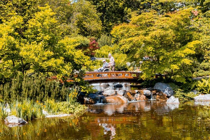 维也纳,奥地利- 2018年5月12日:有木桥和美丽的瀑布的日本庭院 免版税库存照片