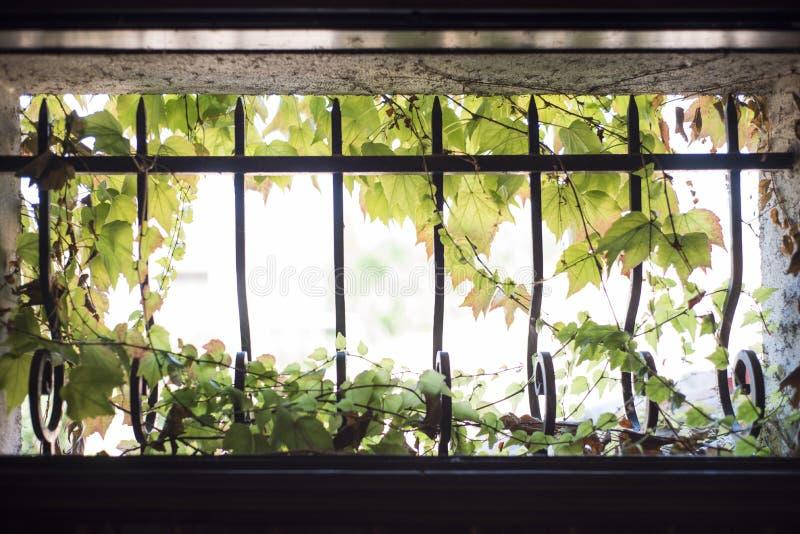 维吉尼亚小窗口铸铁条 免版税库存图片