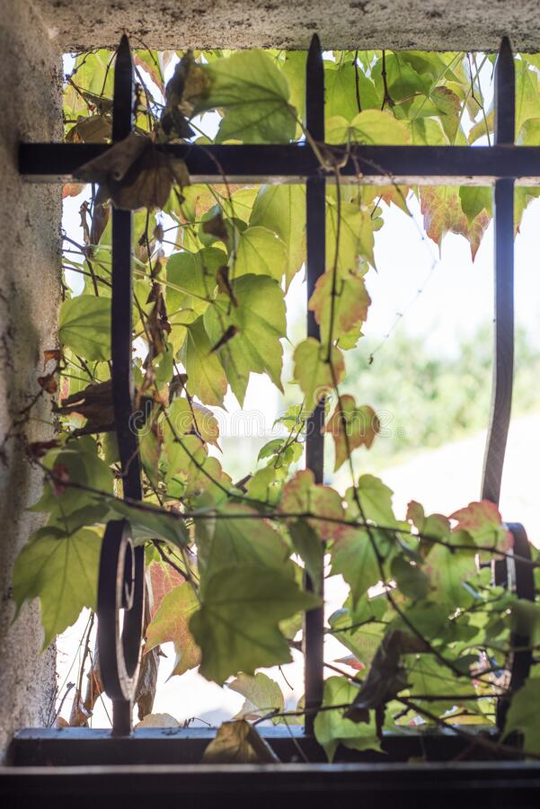 维吉尼亚小窗口铸铁条 免版税库存照片