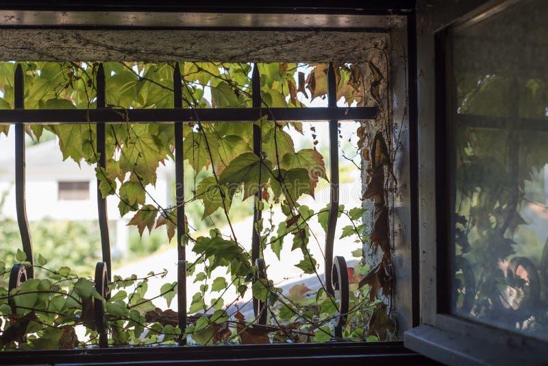 维吉尼亚小窗口铸铁条 库存图片