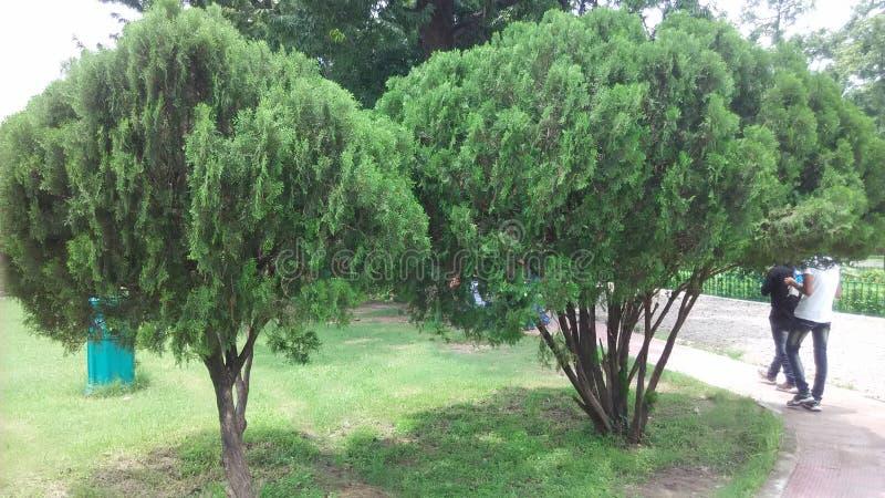 维多利亚palac庭院 库存图片