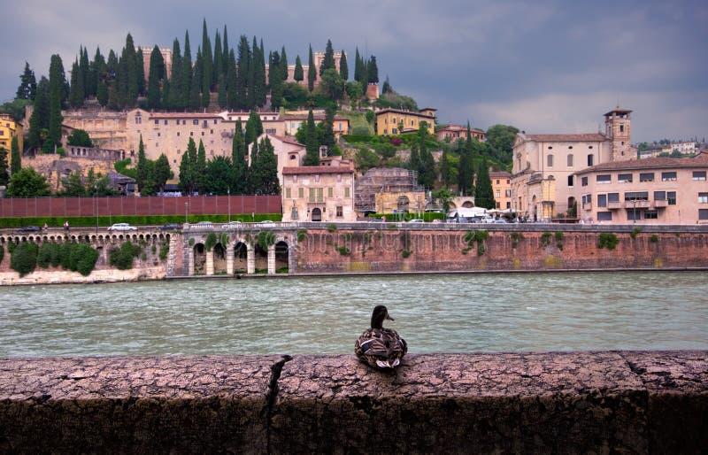 维罗纳老镇的看法  意大利 免版税库存图片