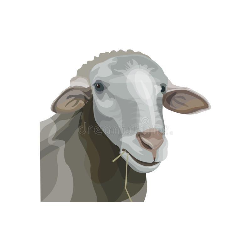 绵羊头像 库存例证