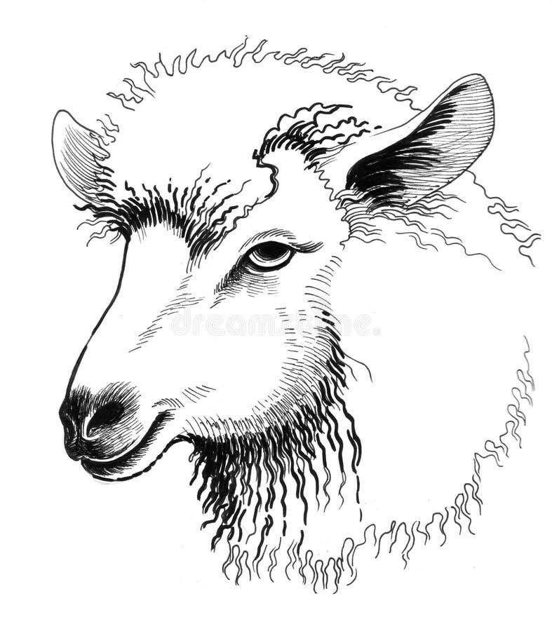 绵羊头 库存例证