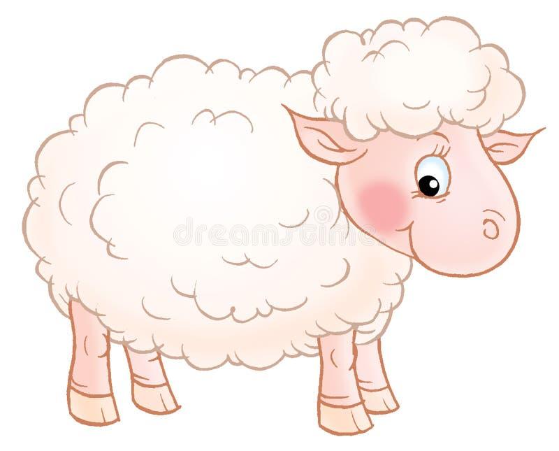 绵羊白色 免版税库存照片