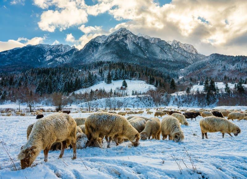 绵羊群在山的底部的 免版税库存照片