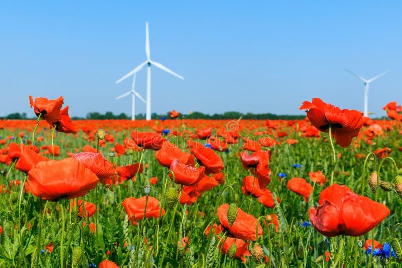 绽放的红色鸦片植物在与风轮机的前景在背景中 库存图片
