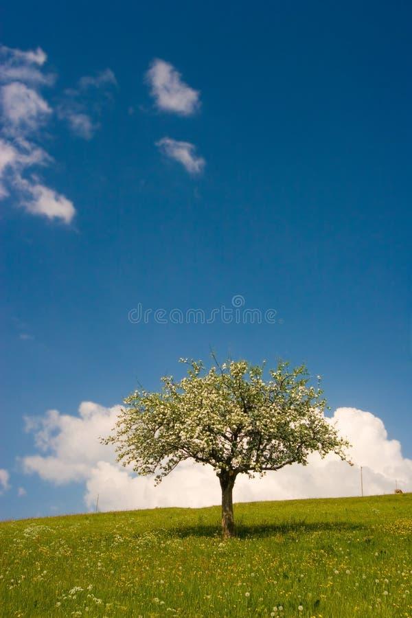 绽放结构树 库存照片