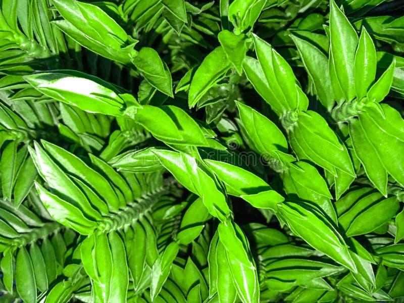 绽放绿色树在庭院里 图库摄影