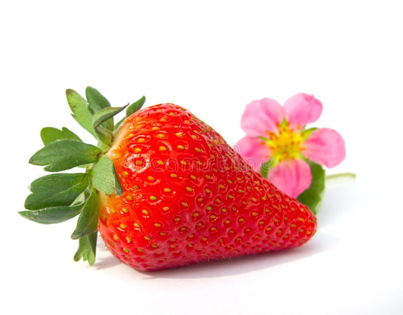 绽放草莓 免版税库存照片